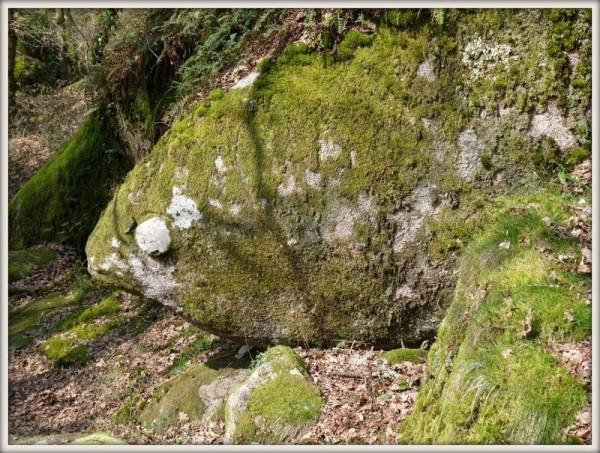 Poisson du Brudoux